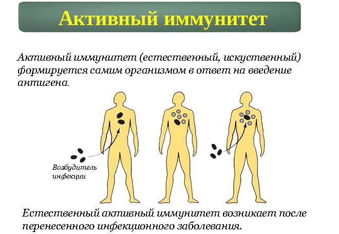 Чем отличается активный от пассивного иммунитета